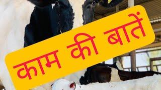काम की बातें Dairy Farm  pdfa