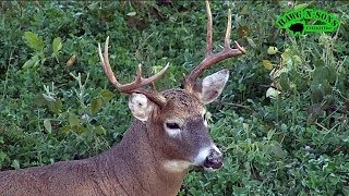 Self Filmed BowHunting Deer - Coyote Kill Shot 3 - Lumenok Lighted Nock