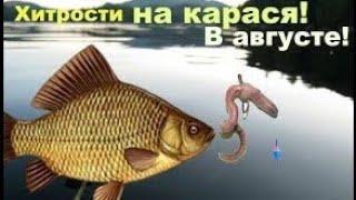 Рыбалка на карася в августе Секреты и техника ловли карася в конце августа начале сентября