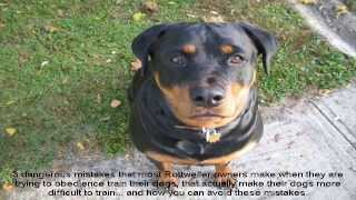 How To Train A Rottweiler To Be A Guard Dog Now