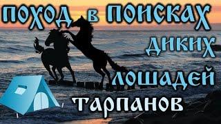 ПОХОД в поисках диких лошадей ТАРПАНОВ