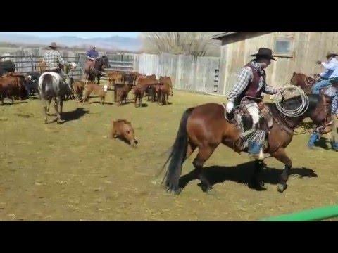 Vlog #6: Branding Cattle at Banks Ranch
