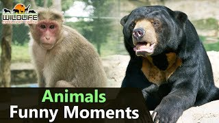 Funny Animals | Animals Funny Moments in Hyderabad Zoo | Monkey | Bear | Wildlife on Planet Earth