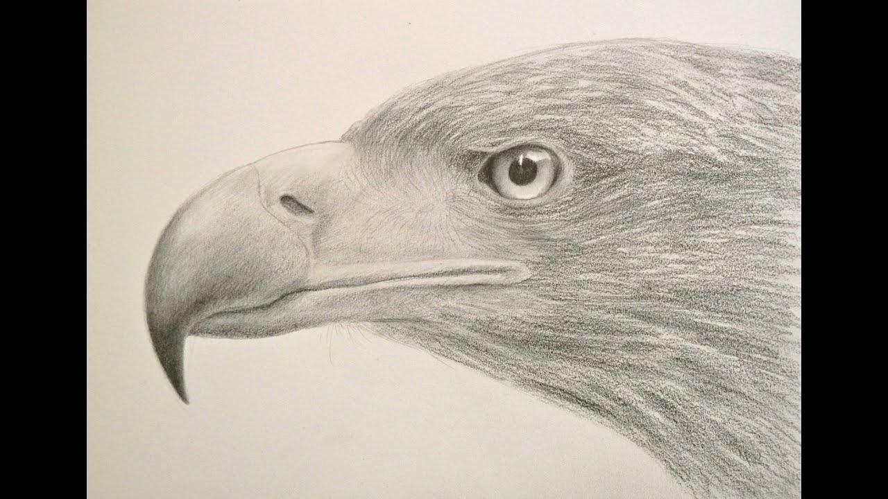 Cómo dibujar una cabeza de águila y sus texturas - Arte Divierte ...