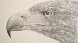 Cómo dibujar una cabeza de águila y sus texturas - Arte Divierte