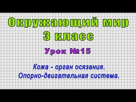 Окружающий мир 3 класс (Урок№15 - Кожа - орган осязания. Опорно-двигательная система.)