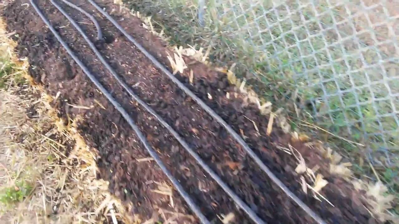 Straw Bale Gardening: Planting Day (after 12 days of conditioning ...