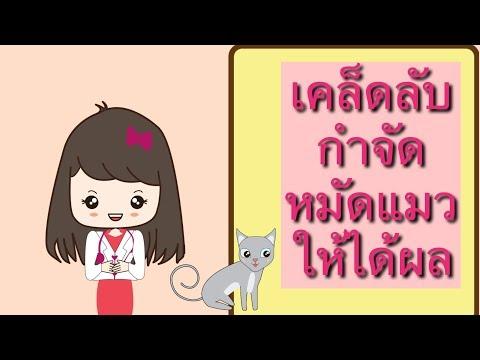 เคล็ดลับกำจัดหมัดแมวให้ได้ผล  EP.13  thaipet.com