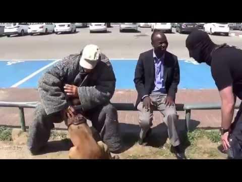 Phản ứng cực nhanh của chó nghiệp vụ được huấn luyện chuyên nghiệp!