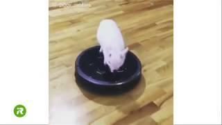 Wszystkie zwierzęta kochają iRoboty!   Roomba   iRobot