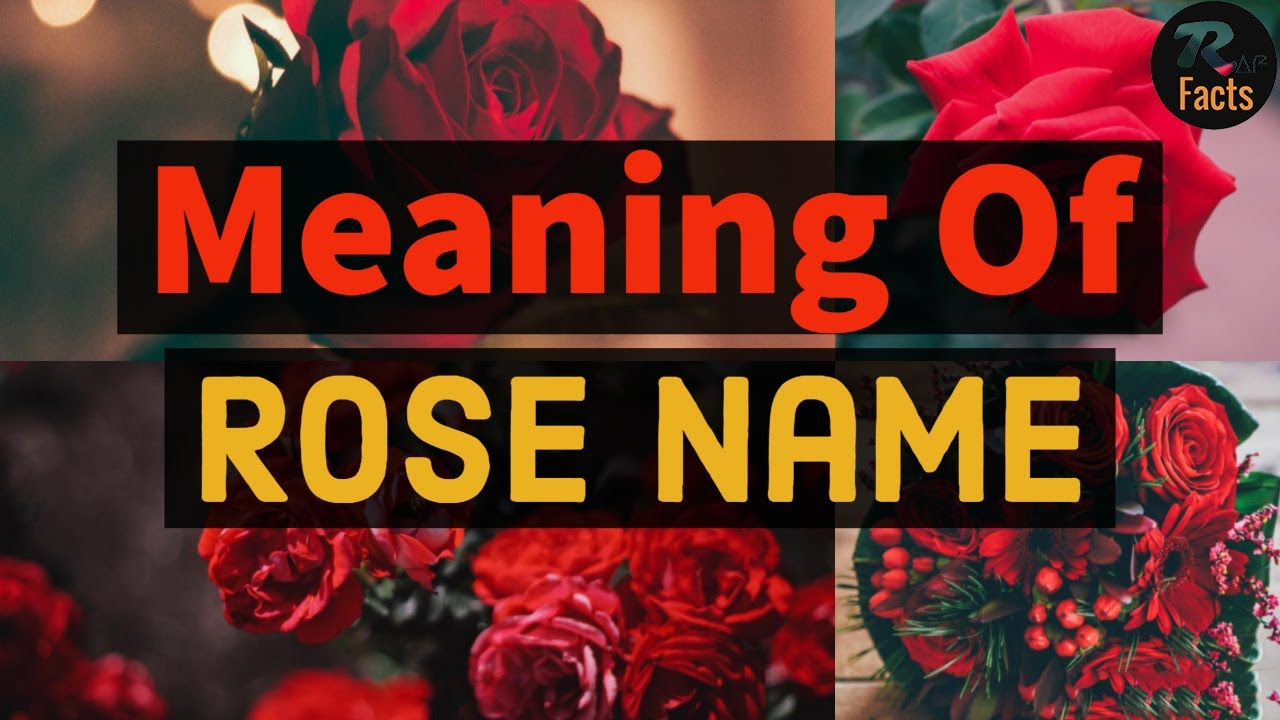 Meaning Of Rose Name Youtube