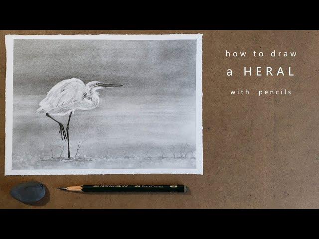 как нарисовать цаплю как нарисовать птицу