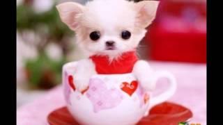 """Фото """"Очень милые собачки ,,"""