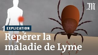 Maladie de Lyme : comment la repérer ?