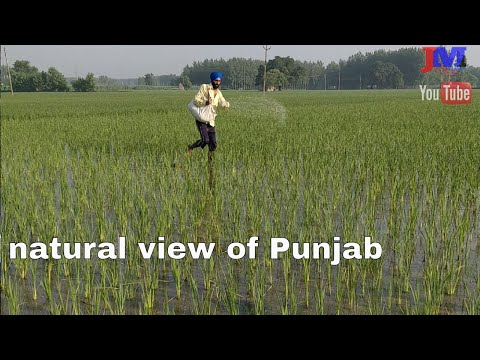 kheta nu Urea | natural view of Punjab