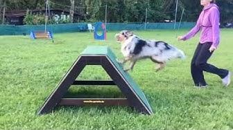 THS-Training Hundefreunde Bamberg