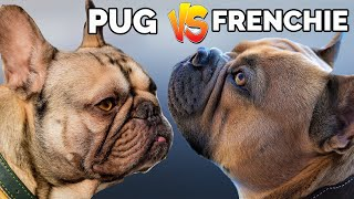 Pug Vs French Bulldog  Which One Is Better !! Dog Vs Dog   Dog Jaw Dropping Facts