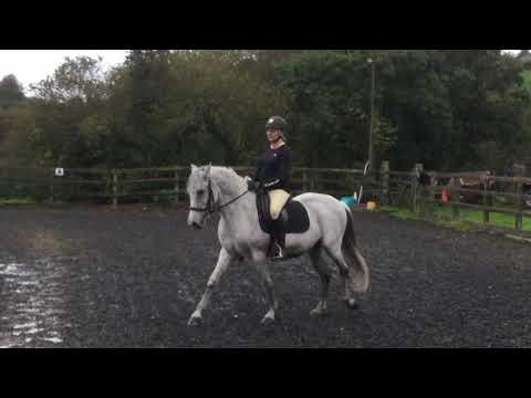 Dressage Anywhere BD Prelim 2  October Jo And Durante