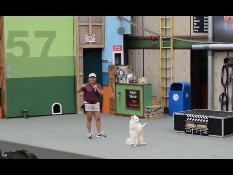 Animal Actors Show at Universal Studios - Los Angeles