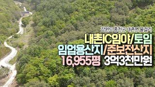 홍천군 내촌면 물걸리 - 내촌IC임야/임업용산지+준보전…