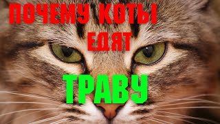 Почему кошки и коты едят траву Интересные факты Вы будете удивлены