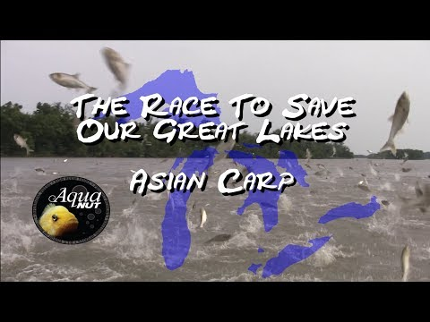 The Asian Carp Invasion : The Race To Save Our Great Lakes
