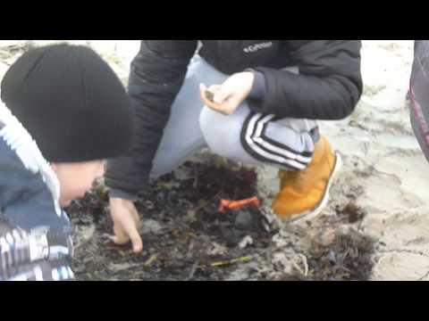 Вот так смельчаки ловят янтарь на побережье Балтики.Россия.