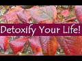 How to Detoxify Your Life (Open Collaboration)