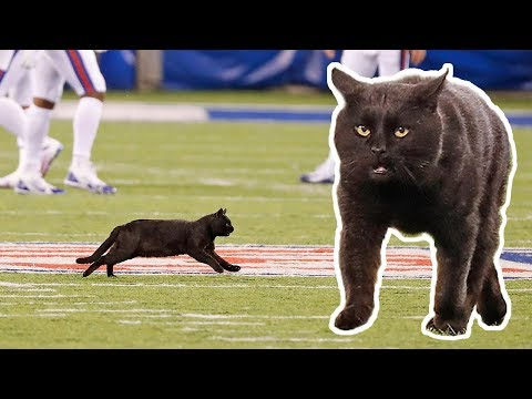 DJ Bee - CURSED: @DallasCowboys new mascot ought to be a #BlackCat #dablock