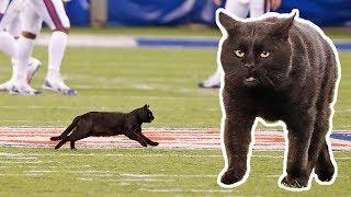Cat On The Field Scores 50-yd Td Run! 🐾