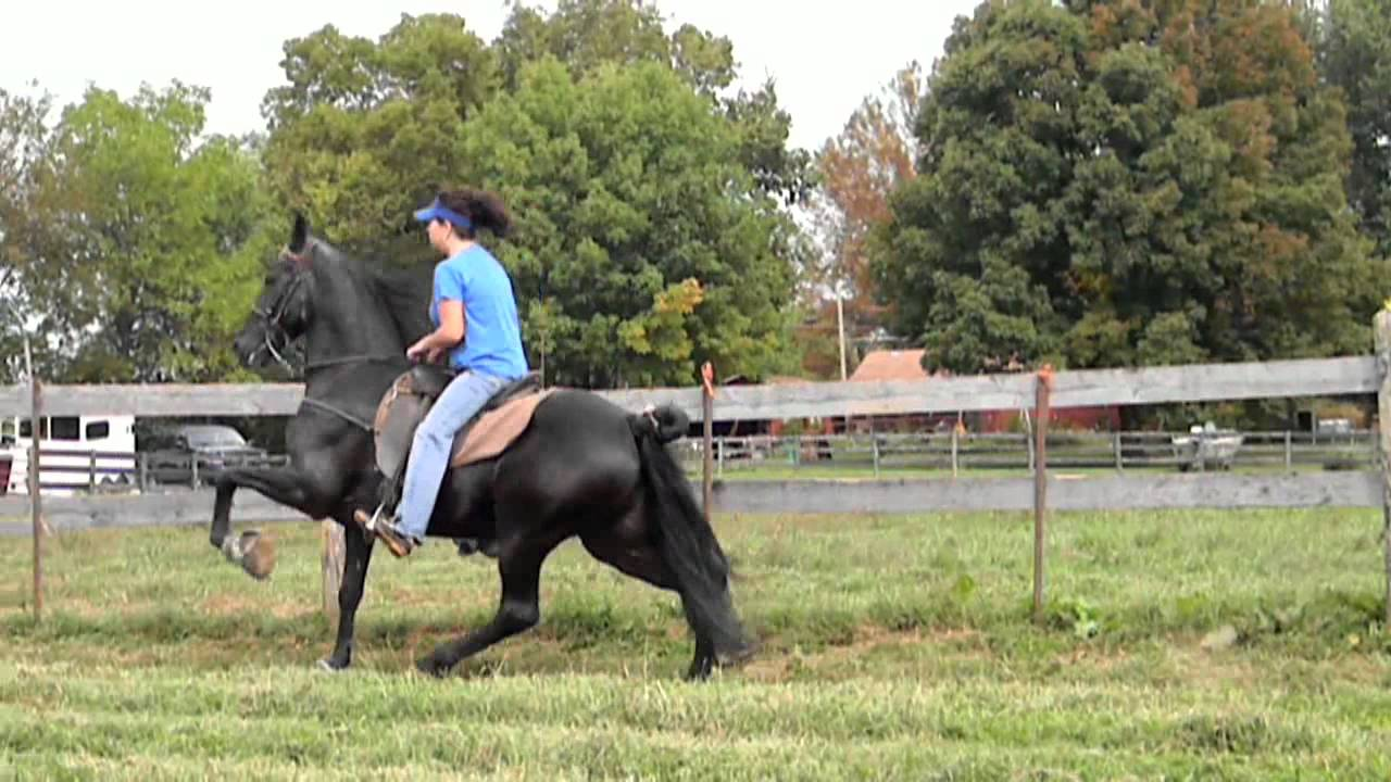 Padded Tennessee Walking Horse For Sale Youtube