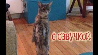 Приколы с котами Попробуй не засмеяться САМОЕ СМЕШНОЕ ВИДЕО - Pso