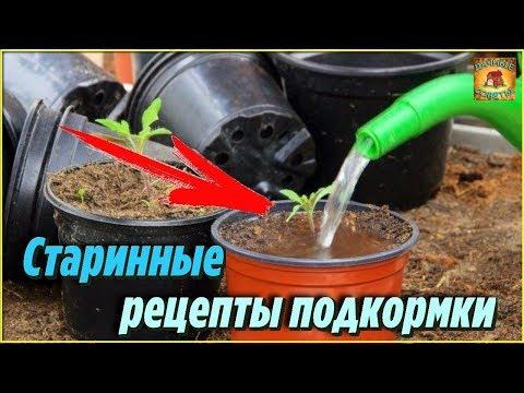Вопрос: Как сделать рассаду помидор крепкой, советы огородников какие?