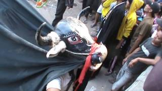Banteng Bantengan Ngamuk Seruduk Penonton