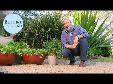 Burke's Backyard, Best Types of Pots For Planting