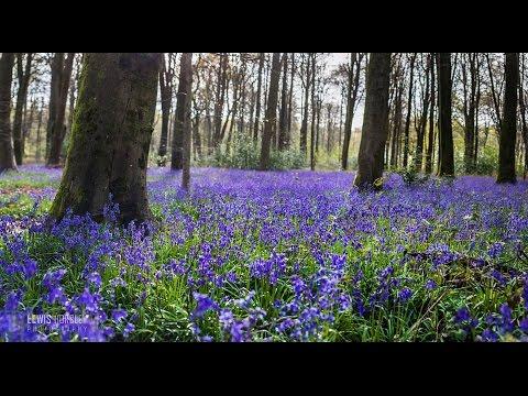 Beautiful Hampshire filmed with DJI Phantom 4 drone