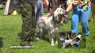 117-я Московская межрегиональная выставка охотничьих собак. Старший ринг сук.