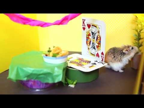 Tiny Hamster Eating Tiny Tacos