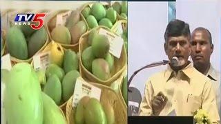AP CM Inaugurates Mango Festival | Horticulture Show | Vijayawada | TV5 News
