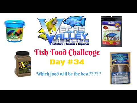FISH FOOD CHALLENGE:DAY 34 WHICH FISH FOOD IS THE BEST? NEW LIFE SPECTRUM, NORTH FIN, EXTREME, RON'S