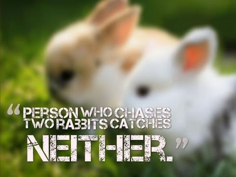 The person who chases two rabbits catches neither