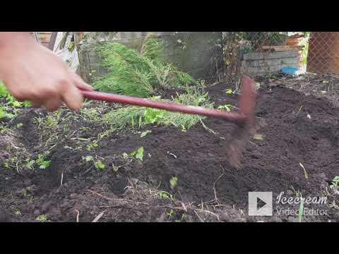 садим декоративную елочку. улучшаем структуру почвы. ландшафтный дизайн.   Den V.