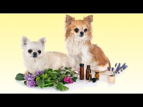 Top 5 Essential Oils for Dogs (and How to Use Them)