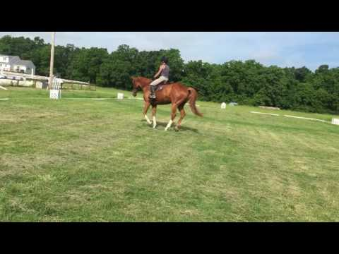 Versailles Trot/Canter Right