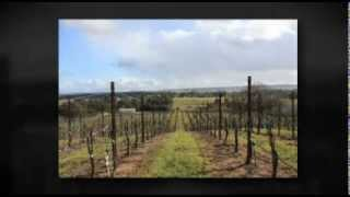 Paso Robles Vineyard For Sale - Paso Robles, California - Wine Real Estate