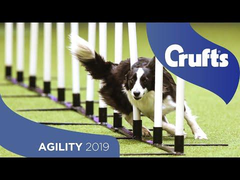 Agility Singles Heat – Medium | Crufts 2019