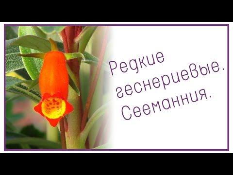 Аптеки Санкт-Петербурга: Озерки, 03 Аптека, Радуга, Фиалка