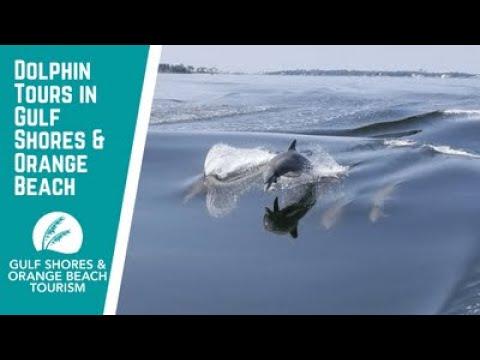 Dolphin Tours In Gulf Shores & Orange Beach, AL | Explore The Alabama Gulf Coast Wildlife
