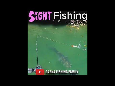 Sight Fishing for Catfish 😸 #fishing #fish #silure #shorts