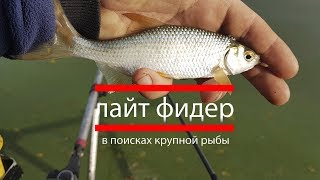 Лайт фидер.  В поисках крупной рыбы.